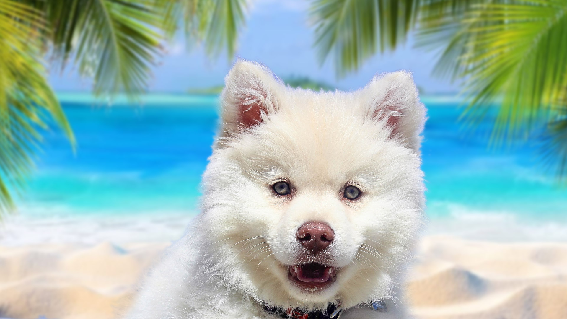 Cute Dogs And Puppies Wallpapers Hd New Tab Themes Backgrounds